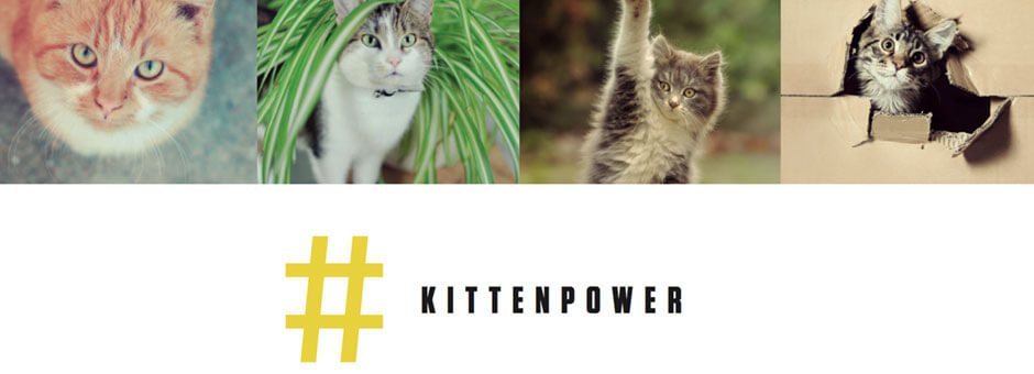 #kittenpower